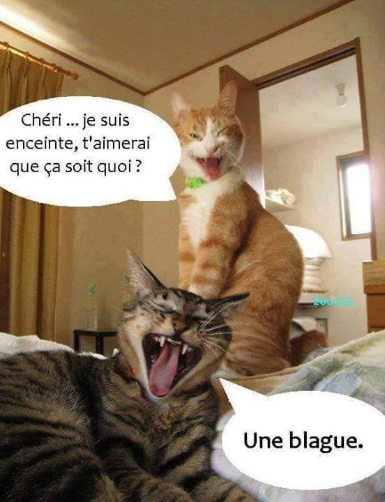 chats droles blague image  Photo de Images de chats hypers drôles!  Il n'y a